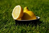 picture of half  - Natural refreshing healthy sliced half lemon and whole lemon in bowl on grass in the sun. Conveying cooling down on a hot Summers day at home in the garden or park outdoor living ** Note: Shallow depth of field - JPG