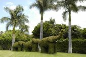 stock photo of garden sculpture  - image of several bushes elephant - JPG