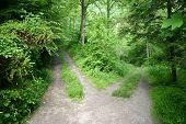 pic of divergent  - A dirt road in the forest splitting into a high road and a low road - JPG