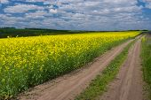 foto of rape  - Spring landscape with rape - JPG