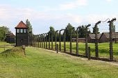stock photo of auschwitz  - Barbed wire electrical fence at Auschwitz - JPG