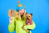 Take Care Pet Autumn. Veterinary Medicine Concept. Health Care For Dog Pet. Regular Flea Treatment.  poster