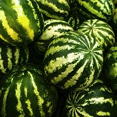 Striped Watermelon Pile Background. Autumn Harvesting Season. Green Ripe Melons On Farmer Market. De poster