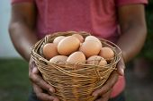 Man hand holding wire basket of fresh chicken eggs. Closeup of african american hands showing eggs i poster