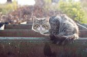 A Homeless Dirty Gray Cat.homeless Animals Live In The Garbage. Shallow Depth Of Field. poster