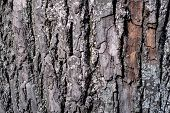 Texture Pattern Of The Bark. Bark Of A Tree In The Forest. poster