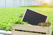 Copy Space. Blank Blackboard In Organic Hydroponic Fresh Vegetable Produce Wooden Box In Greenhouse  poster