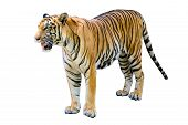 Tiger White Background Isolate Full Body Tiger poster