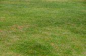 Green Grass Texture Background, Green Lawn, Backyard For Background, Grass Texture, Green Lawn Pictu poster