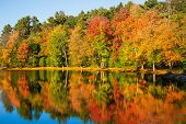 Colorful Foliage Reflections In Pond Water On A Sunny Autumn Day In New England poster