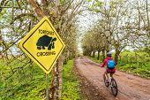 Galapagos Giant Tortoise funny sign and woman tourist cycling on bike on Santa Cruz Island on Galapa poster