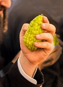 Religious Jew with sidelocks chooses etrog for the holiday Sukkot. The annual pre-holiday bazaar in  poster