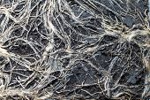 The Texture Of The Intertwined Roots Of The Plant In The Soil Briquette, Close-up. Soil Briquette Ta poster