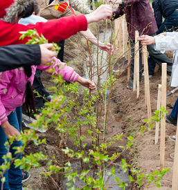 picture of peg-leg  - a group of students plant young trees in a yard - JPG