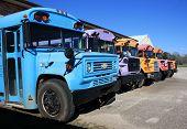 Постер, плакат: Радуга цвета школьных автобусов