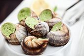 stock photo of escargot  - Escargots with garlic butter and lemon - JPG