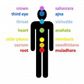 foto of sanskrit  - Seven colorful chakras column with their english and sanskrit name upon male black shadow in white background - JPG
