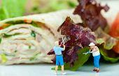 picture of iceberg lettuce  - Miniature plastic people cutting salad - JPG