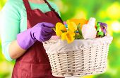picture of spring-cleaning  - Housewife holding basket with cleaning equipment on bright background - JPG