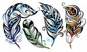 foto of feathers  - Collection of decorative feathers - JPG