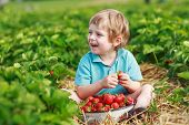 pic of strawberry blonde  - Happy little toddler boy on pick a berry farm picking strawberries in bucket outdoors - JPG