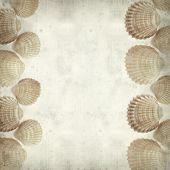 image of cockle shell  - textured old paper background with cockle shells - JPG