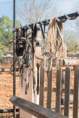 picture of bridle  - Horse bridles and other equipment in the stable - JPG