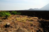 stock photo of vegetation  - Vegetation at the base of volcano near the burnt lava field - JPG