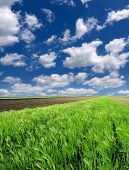 picture of cultivation  - Cultivated green meadow - JPG