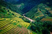 image of rice  - A river flow through gold terraced rice fields , in rice season , at Mu Cang Chai province, Northwest,Vietnam