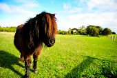 stock photo of pony  - a handsome pony pony in a farm - JPG