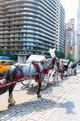 image of carriage horse  - Central Park horse carriage rides in Manhattan New York US - JPG