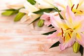 stock photo of easter lily  - Frame of pink lilies on wooden background - JPG