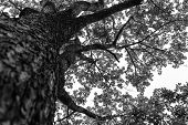 stock photo of grayscale  - An aerial view of a tall tree on a blue sky background on a grayscale  - JPG