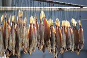 picture of fish  - Dry fish dried - JPG