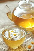 image of chamomile  - Cup of camomile tea with chamomile flowers and teapot - JPG