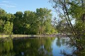 picture of wetland  - wood lake nature center wetlands woods and reflections in richfield minnesota - JPG