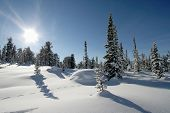 picture of winter landscape  - winter landscape trees under snow after snow - JPG