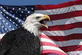 Постер, плакат: Американский флаг и орел