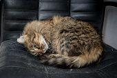 Cute Funny Tabby Gray Cat poster