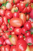 Village Market Colorful Tomatoes. Group Of Mix Tomatoes poster