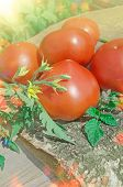 Ripe Red Organic Tomatoes poster