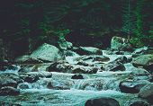Pine Tree Forest River Flows Through The Rocks. Beautiful Powerful Rapid Steam Of The Mountain River poster