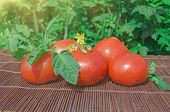 Fresh Red Tomatoes On Old Rustic Wooden Background Outdoors. poster