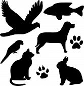 foto of animal silhouette  - vector domestic pet silhouettes with paws  - JPG