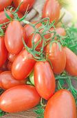 Red Long Cherry Tomatoes. Tomatoes In Canvas Bag. Ripe Long Plum Tomatoes poster