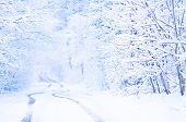 Snow Covered Trees. Winter Road And Trees Covered  Snow poster