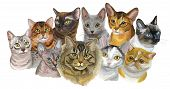Set Of Colorful Vector Portraits Of Cats  Breeds (exotic Shorthair, Abyssinian, Bengal , Burmese, Eg poster