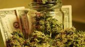 How To Grow Huge Marijuana Buds.   Marijuana Buds Harvest poster