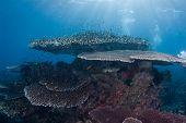 image of raja  - General Reef Scene under sunburst Raja Ampat Indonesia - JPG